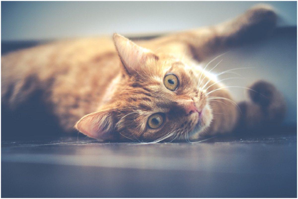 CBD Cat Treats